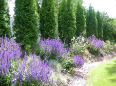 Awesome Fence With Evergreen Plants Landscaping Ideas 102