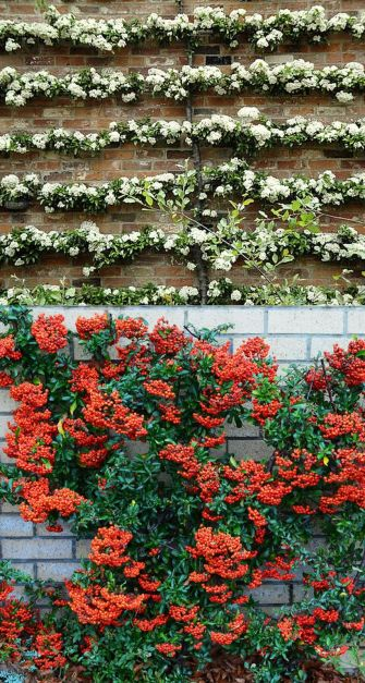 Awesome Fence With Evergreen Plants Landscaping Ideas 106