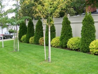 Awesome Fence With Evergreen Plants Landscaping Ideas 40