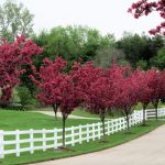 Awesome Fence With Evergreen Plants Landscaping Ideas 45
