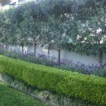 Awesome Fence With Evergreen Plants Landscaping Ideas 71