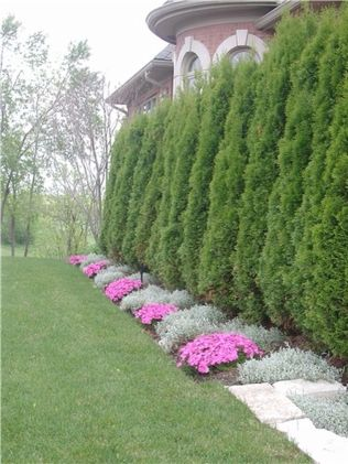 Awesome Fence With Evergreen Plants Landscaping Ideas 87