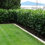 Awesome Fence With Evergreen Plants Landscaping Ideas 88