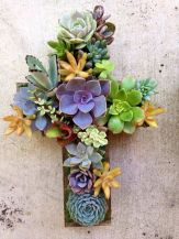 Beauty Succulents for Houseplant Indoor Decorations 14 1