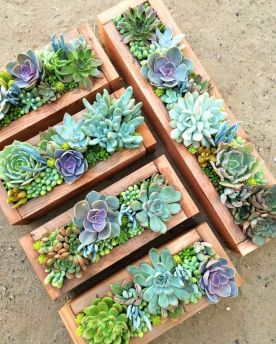 Beauty Succulents for Houseplant Indoor Decorations 22 1