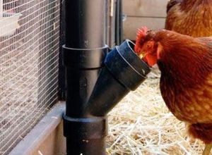 DIY Chicken Feeder from PVC