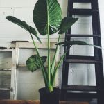 Beautiful Home Plant for Indoor Decorations 5