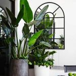 Beautiful Home Plant for Indoor Decorations 8