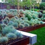 Texas Style Front Yard Landscaping Ideas 9