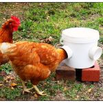 Chicken feeder from pvc 1