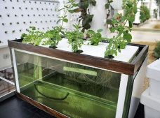 DIY Indoor Aquaponics Fish Tank Ideas 13