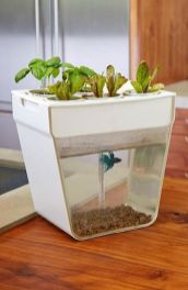 DIY Indoor Aquaponics Fish Tank Ideas 19