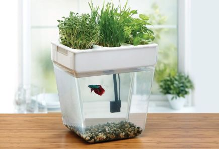 DIY Indoor Aquaponics Fish Tank Ideas 21