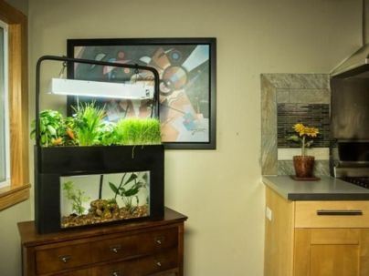 DIY Indoor Aquaponics Fish Tank Ideas 24