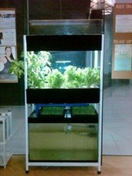 DIY Indoor Aquaponics Fish Tank Ideas 27