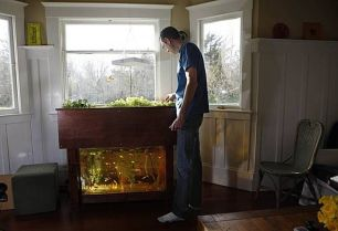DIY Indoor Aquaponics Fish Tank Ideas 29