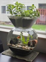 DIY Indoor Aquaponics Fish Tank Ideas 32