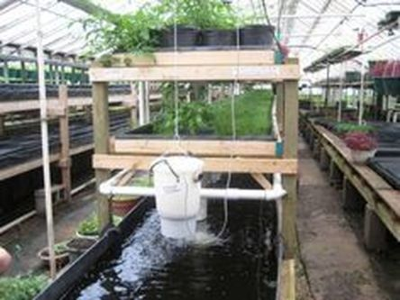 DIY Indoor Aquaponics Fish Tank Ideas 37
