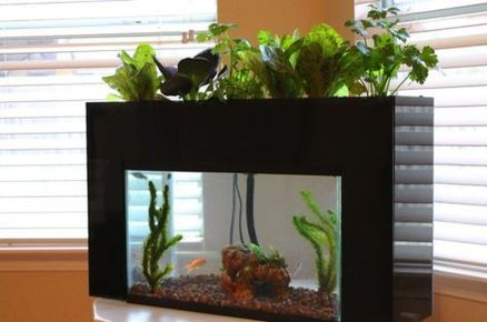 DIY Indoor Aquaponics Fish Tank Ideas 42