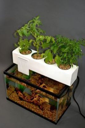 DIY Indoor Aquaponics Fish Tank Ideas 47