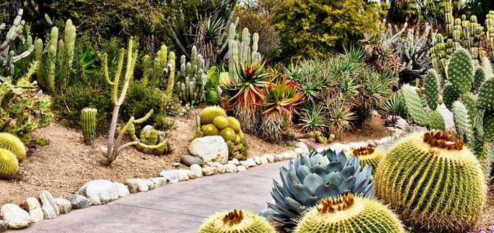 60 Stunning Desert Garden Landscaping Ideas For Home Yard Rockindeco