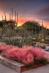 Stunning desert garden ideas for home yard 29