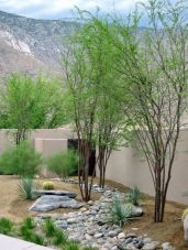 Stunning desert garden ideas for home yard 53
