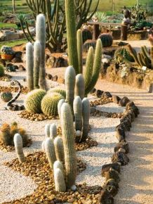 Stunning desert garden ideas for home yard 59