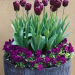 Beauty Tulips Arrangement for Home Garden 20