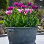 Beauty Tulips Arrangement for Home Garden 22