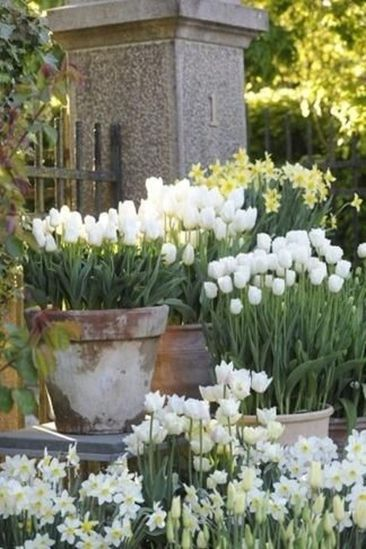Beauty Tulips Arrangement for Home Garden 4