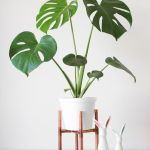 Cool Plant Stand Design Ideas for Indoor Houseplant 39