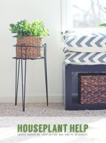 Cool Plant Stand Design Ideas for Indoor Houseplant 55