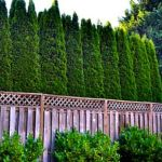 Stunning Privacy Fence Line Landscaping Ideas 36