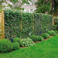 Stunning Privacy Fence Line Landscaping Ideas 64