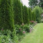 Stunning Privacy Fence Line Landscaping Ideas 91