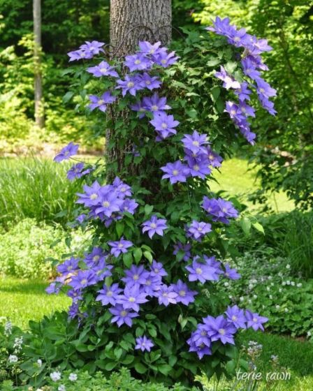 Beautiful Flowering Tree for Yard Landscaping 10