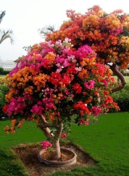 Beautiful Flowering Tree for Yard Landscaping 17