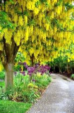 Beautiful Flowering Tree for Yard Landscaping 27