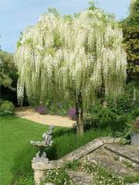 Beautiful Flowering Tree for Yard Landscaping 33