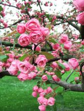 Beautiful Flowering Tree for Yard Landscaping 39