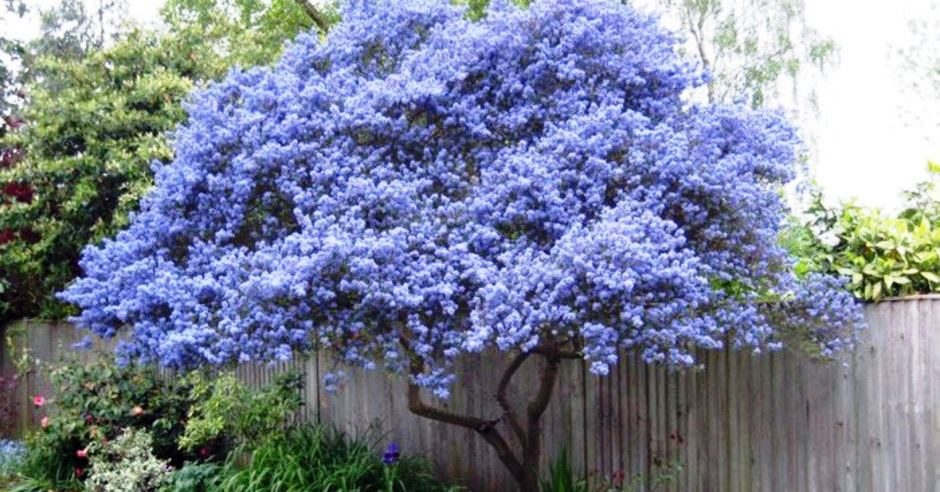 40 Beautiful Flowering Trees Ideas For Yard Landscaping Rockindeco