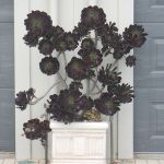 Spooky Plant and Flower Ideas to Make Perfect Goth Garden 50