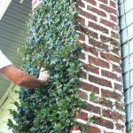 Impressive Climber and Creeper Wall Plants Ideas 13