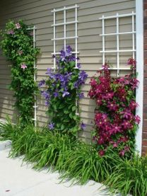 Impressive Climber and Creeper Wall Plants Ideas 19