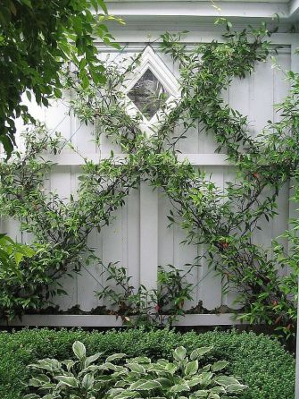 Impressive Climber and Creeper Wall Plants Ideas 25