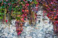 Impressive Climber and Creeper Wall Plants Ideas 63