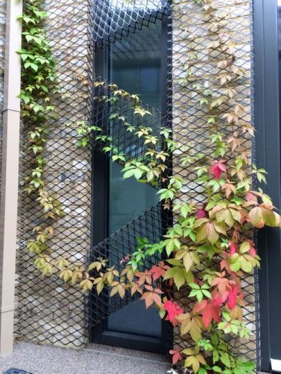 Impressive Climber and Creeper Wall Plants Ideas 68