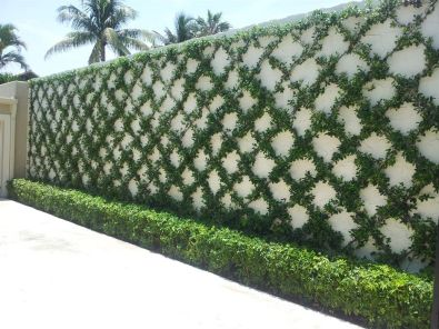 Impressive Climber and Creeper Wall Plants Ideas 76