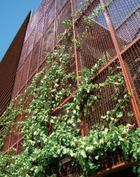 Impressive Climber and Creeper Wall Plants Ideas 80